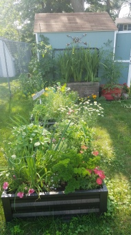 A ton of herbs and flowers
