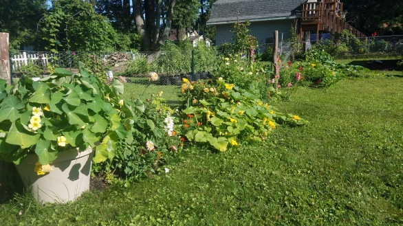 I planted some random squash in the row...which will not be in the plan for next season