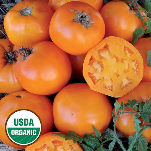 0261-nebraska-wedding-tomato-organic