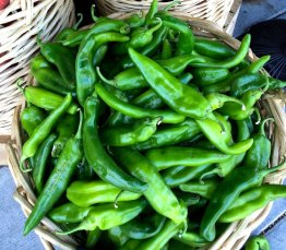 Anaheim Peppers photo via Sandia Seed Company